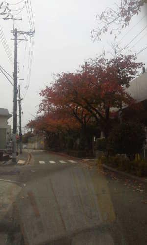 園田駅へ通じる桜並木の紅葉