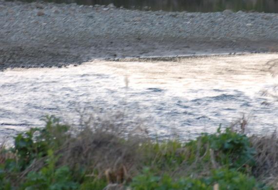 藻川の中にある瀬の写真