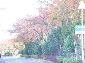 園田駅からアパートまでの桜並木