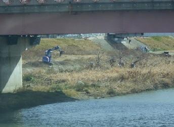 藻川の河川敷で樹木の伐採