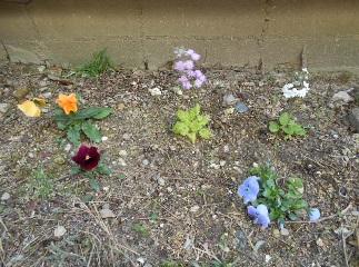 花のある賃貸